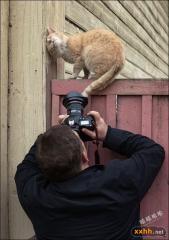 猫咪为照相摆的造型,太逗了